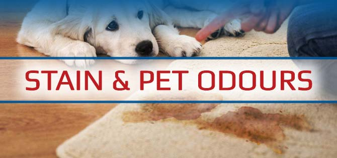 SaniTech Services Stain and Pet Odour Cleaning